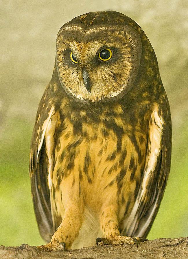 Title:Little Owl Medium:Digital Photography Size:17X24