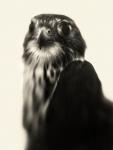 """Elena Lyakir – Brooklyn, NY TitlePride   MediumPhotography   Size40""""x30"""""""