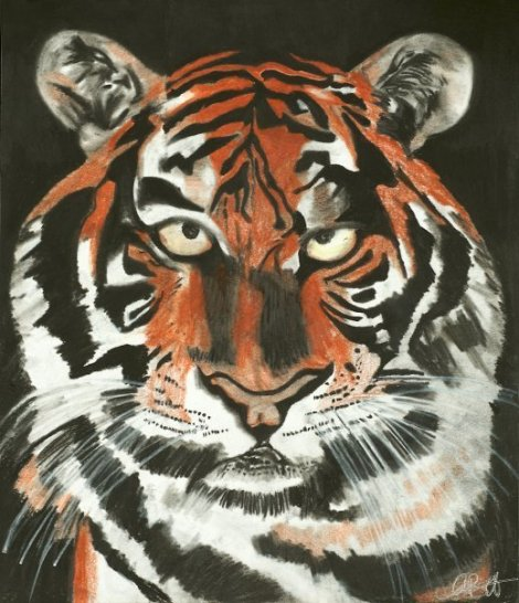 "Tiger Charcoal and Pencil 8"" x 11"""