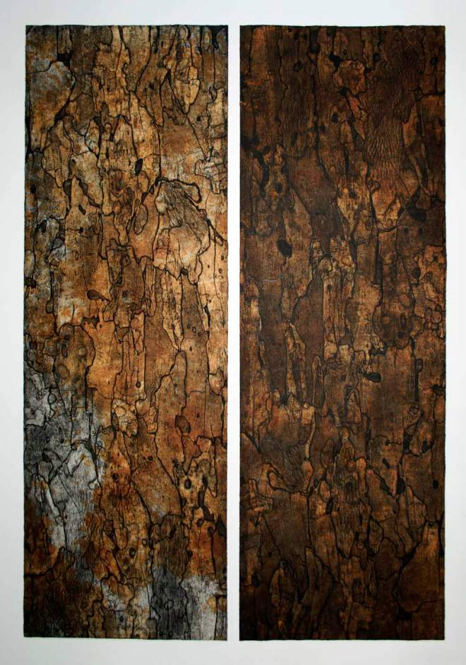 Title Sycamore I & Sycamore II (Diptych)   Medium 	Bark Intaglio and Rust Monoprints   Size 	70 in x 23 in each