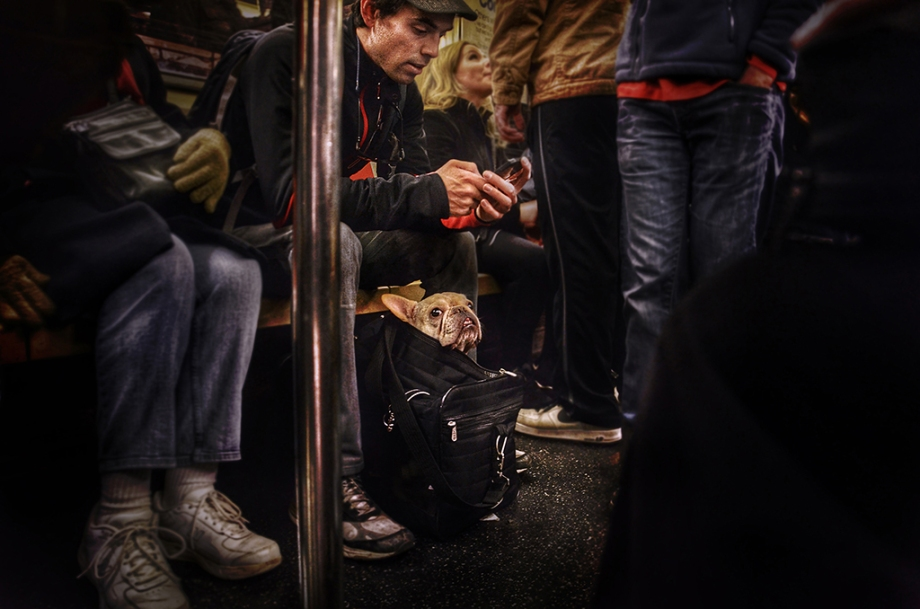 """Title:Dog in a Bag Medium:Photography Size:11""""x 14"""""""