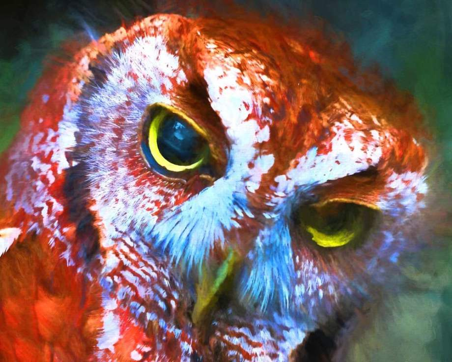 Title:red OWL Medium:	DIGITAL PAINTING Size:	13 X19