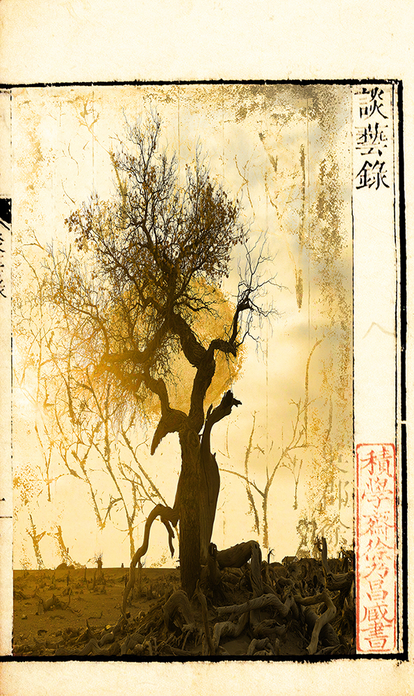 3rd Place Wenjun Fu - Chongqing, China A Wind from yesterday No.1 51 x 97cm