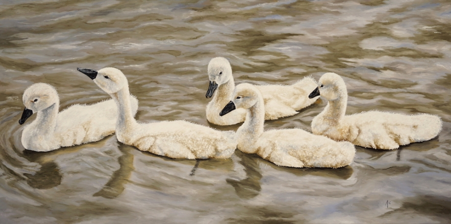 Title: Cygnets Medium: Oil Size: 24 x 48