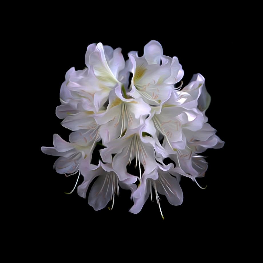 Title:Morning Bloom Medium:Creative Photography Size:40x40